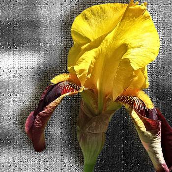 Iron Iris by Susan Kinney