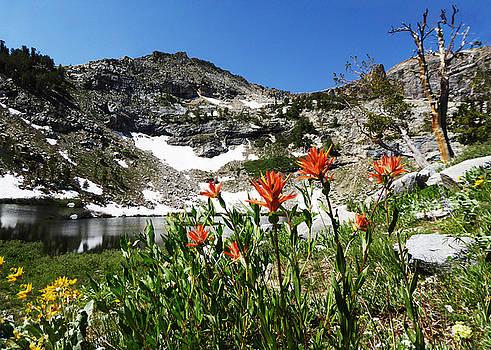 Island Lake with Wildflowers by Alan Socolik