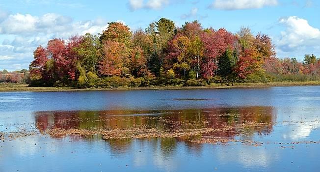 Island Reflection...Autumn  by Sheila Price