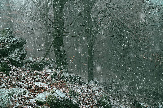 It is Snowy in the Woods by Jenny Rainbow