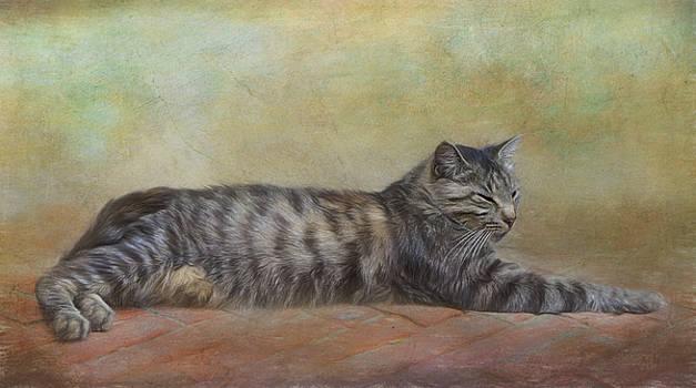 Italian cat. by Lyn Darlington