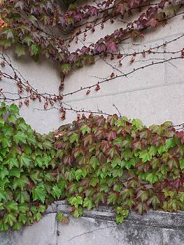 Ivy Wall III by Anna Villarreal Garbis