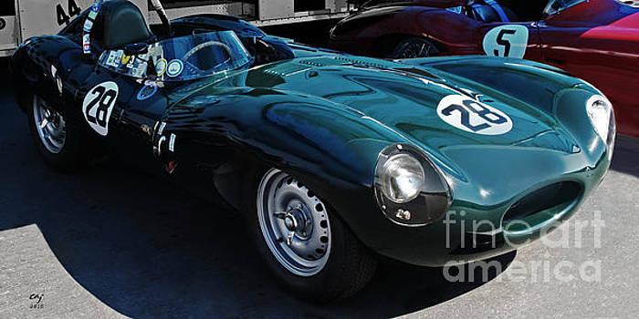 Jaguar D Type by Curt Johnson