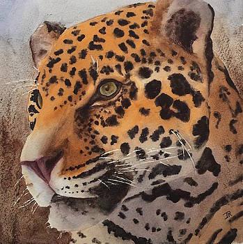 Jaguar by June Rollins