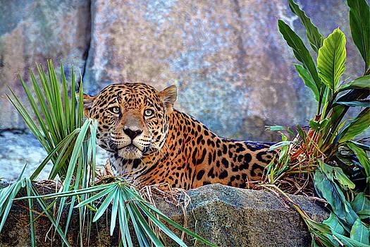 Jaguar by Savannah Gibbs