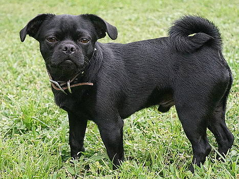 Laurie Perry - Jake the Frug