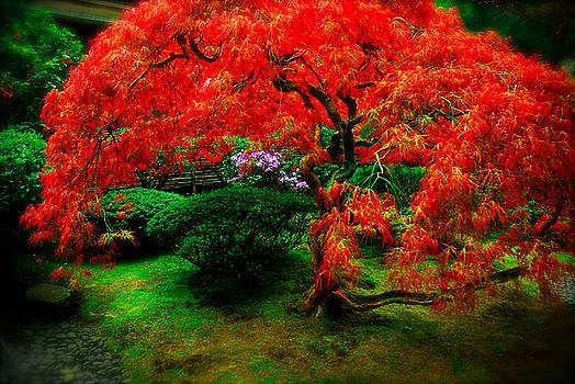 Japanese Gardens Portland by Craig Perry-Ollila