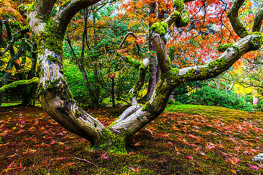 Japanese Maple by Hisao Mogi