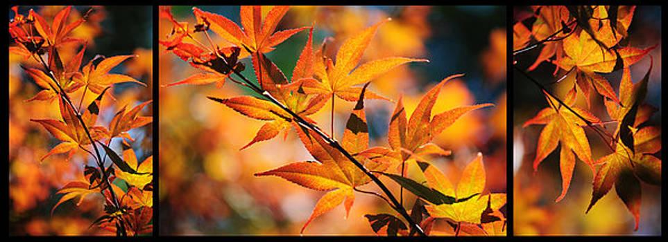 Jenny Rainbow - Japanese Maple Rhapsody. Triptych