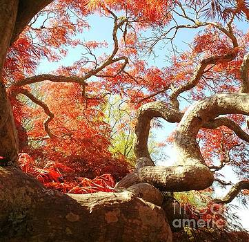 Japanese Maple Tree by Anita Adams