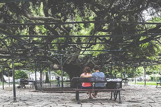 Jardim do Principe Real by Andre Goncalves