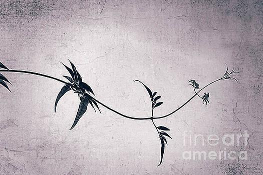 Jasmine by Linda Lees