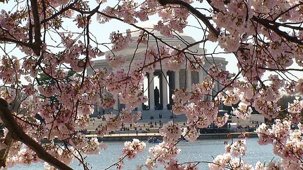 Jefferson Through the Cherry Blossoms by Charles Kraus