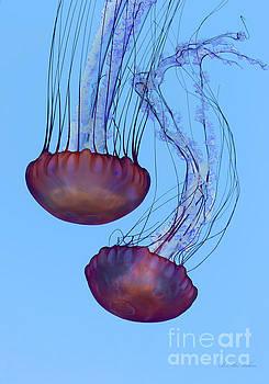 Barbara McMahon - Jellyfish Dance