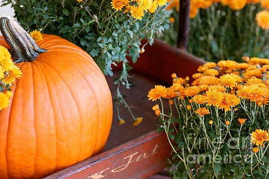 Jet Pumpkin by Cathy Dee Janes