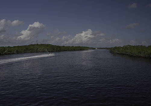 Judy Hall-Folde - Jet Through the Mangroves