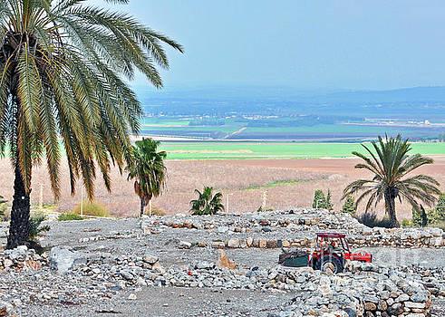Jezreel Valley 2 by Lydia Holly