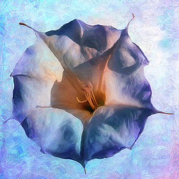 Jimsonweed Bloom by Sandra Selle Rodriguez