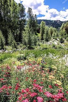 John Denver Sanctuary Flowers Two by Veronica Batterson