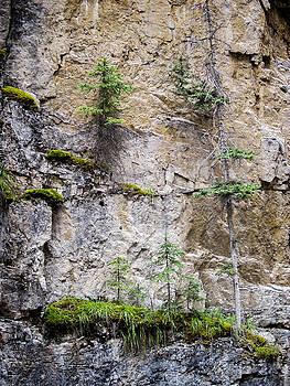 Mary Lee Dereske - Johnson Canyon Banff National Park Canada