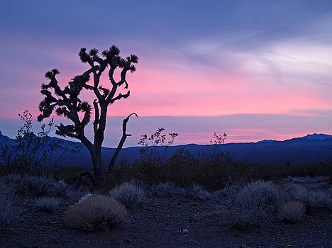 Jeff Brunton - Joshua Tree 9
