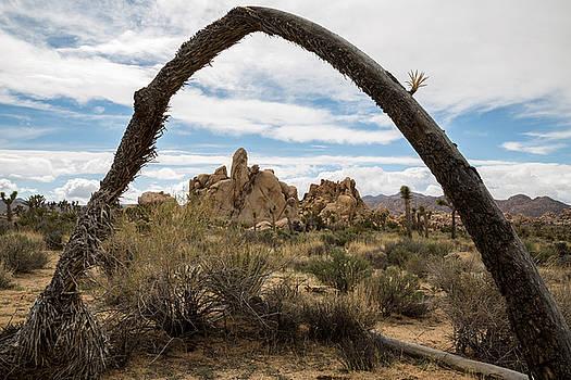 Joshua Tree Arch by John Daly