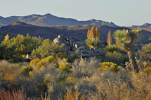 Christine Till - Joshua Tree National Park in California