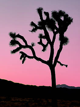 Jeff Brunton - Joshua Tree National Park 66