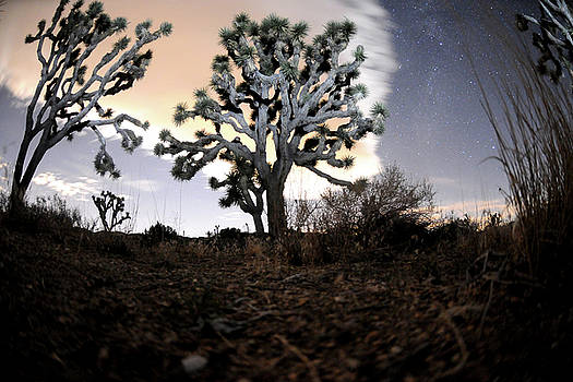 Joshua Tree one by Mike Lindwasser Photography