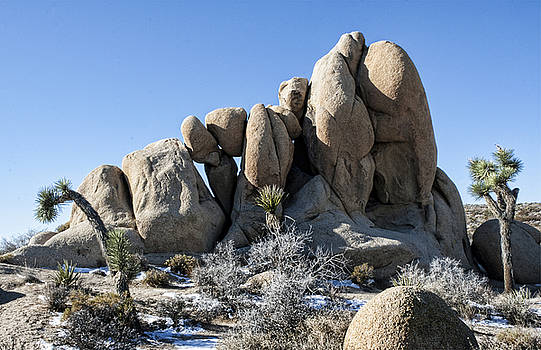 Joshua Tree Snowy Connection by Chris Brannen
