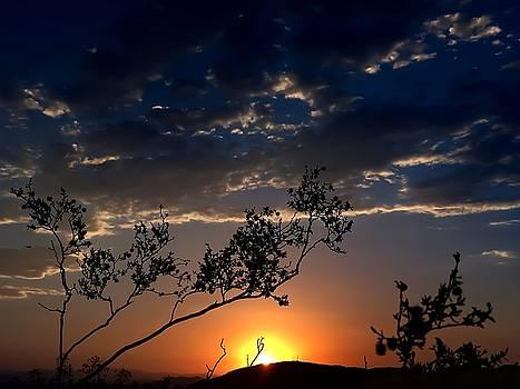 Joshua Tree Sunset by Chris Tarpening