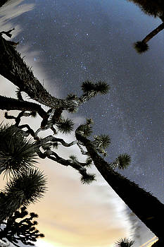 Joshua Tree Two by Mike Lindwasser Photography