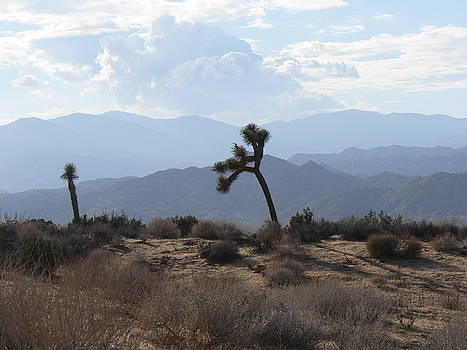 Joshua Trees in the Desert by Susan Norton