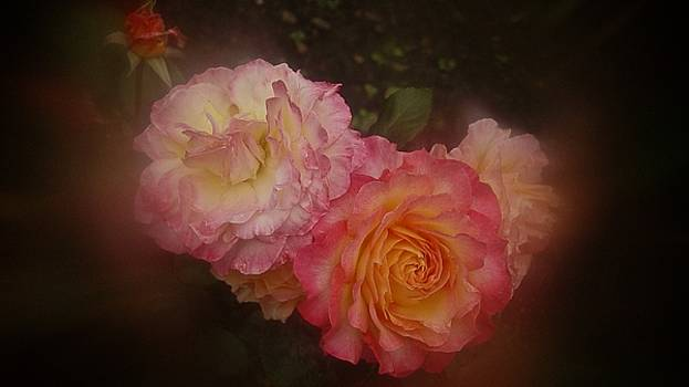July 2016 Roses No. 1 by Richard Cummings