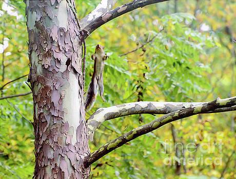 Jump To It - Squirrel Jump by Kerri Farley