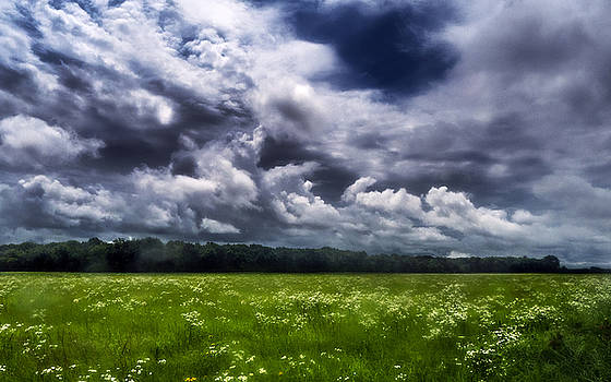 June Wildflowers under Storm by Eric Benjamin