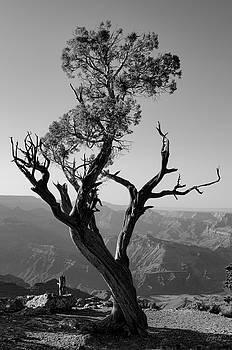 David Gordon - Juniper Tree at Grand Canyon II BW