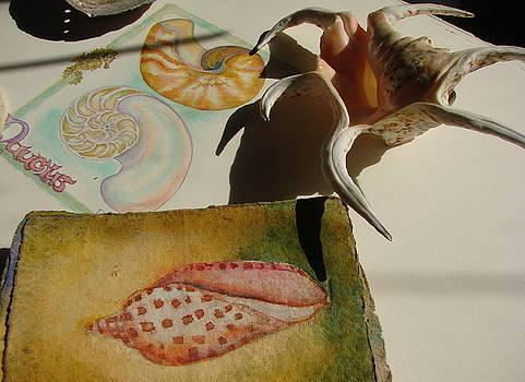 Junonia Volute Shell by Phyllis OShields