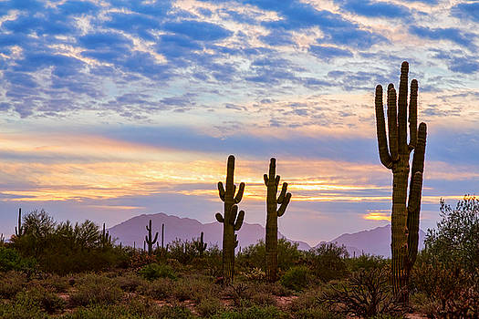Just Another Colorful Sonoran Desert Sunrise by James BO Insogna