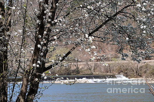 Just Beyond The Blossoms by Brenda Bostic