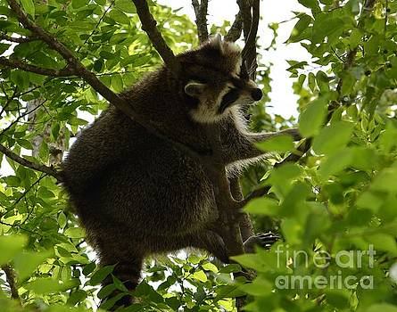 Just hangin Out by Janice Spivey