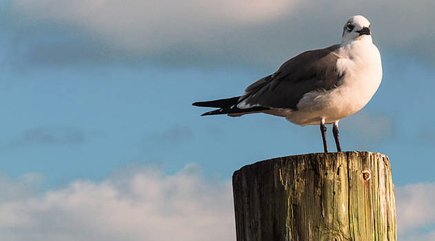 Just Standing On The Dock by Phillip Burrow