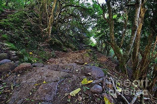 Kalaupapa Trail Switch Backs 24 and 23 by Craig Wood