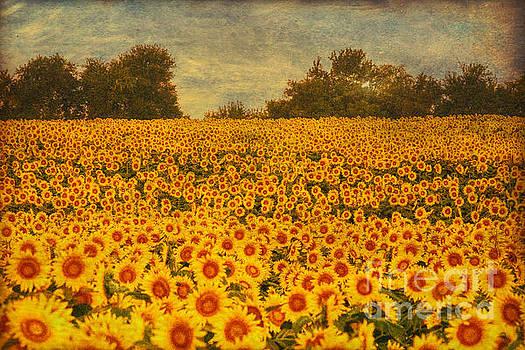 Kansas by Lynn Sprowl