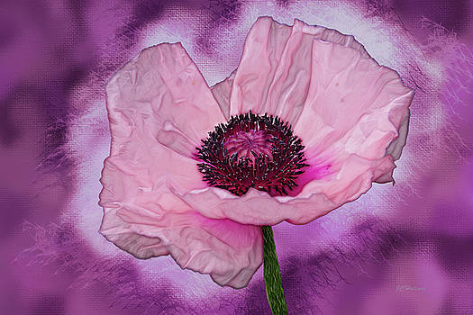 Karinia Poppy by Joe Halinar