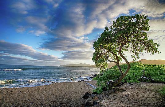 Kauai Landscape by Steven Michael