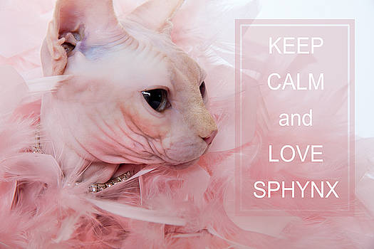 Keep Calm and Love Sphynx Cat by Zina Zinchik