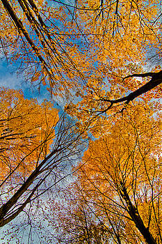 Keep Looking Up by Linda Unger