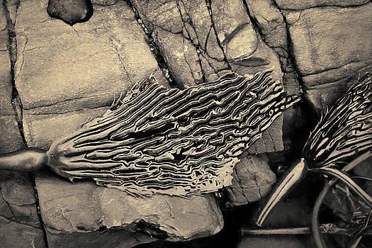 David Gordon - Kelp IV Toned