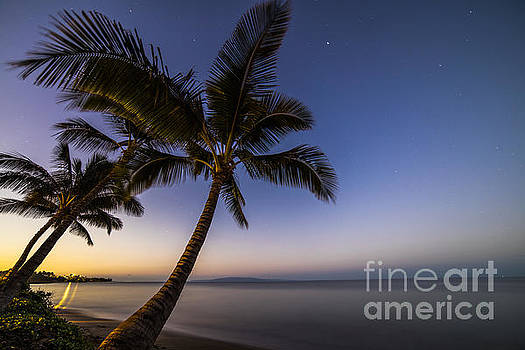 Kihei Maui Hawaii Palm Tree Sunrise by Dustin K Ryan